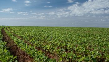 Por la sequía, el consumo de fertilizantes apenas creció 4%