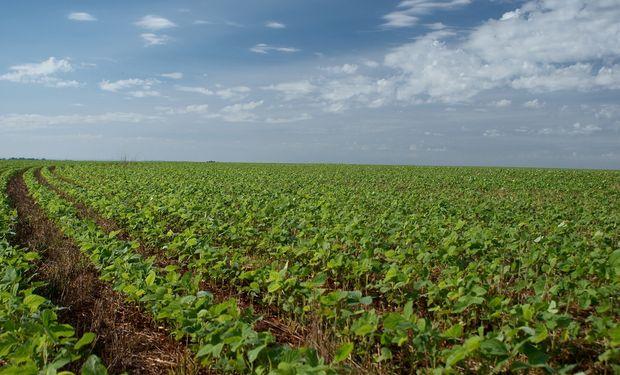 Lluvias demoran la siembra de soja, pero recargan humedad de los suelos