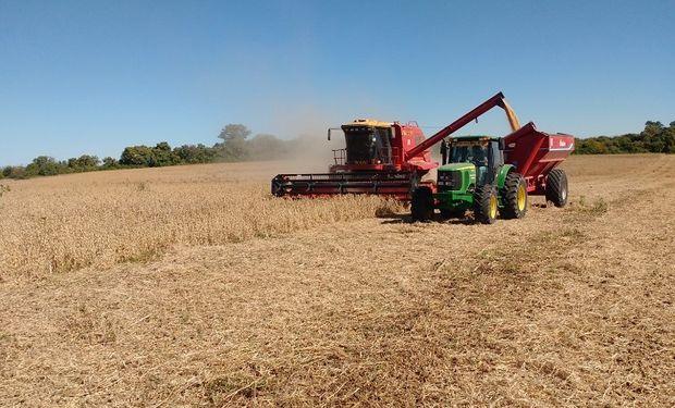 Hasta ahora, la cosecha de soja avanzó con rindes dispares: en la zona núcleo hay brechas de hasta 40 quintales