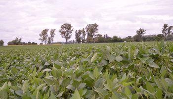 La soja se encuentra en muy buen estado y podría batir récord en el centro norte de Santa Fe