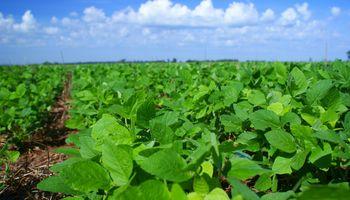 La soja asciende 0,5% y vuelve a superar barrera de u$s 500