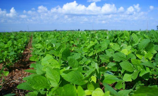 Con buen clima Paraguay lanzó campaña de soja