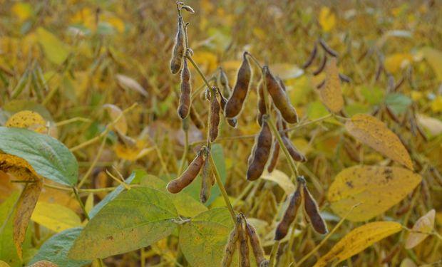 La cosecha de granos gruesos sigue con muchas complicaciones por motivos climáticos.