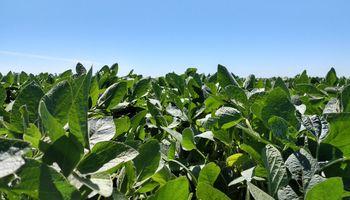 Por las lluvias elevan la proyección de producción de soja a 53,1 millones de toneladas
