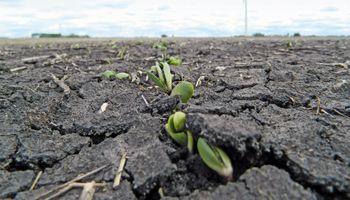 Segunda jornada con fuertes subas para soja, trigo y maíz: cómo impactó en el mercado local