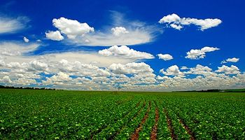 Alertan que es baja la devolución de retenciones a productores de soja del Norte