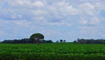 Subas en soja por clima seco sudamericano arrastran cereales al alza