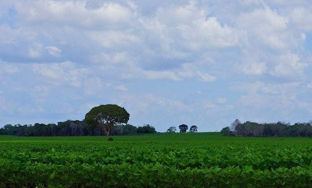 La falta de precipitaciones complica la situación en Argentina.