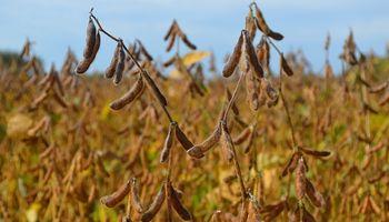 La soja alcanza el máximo de los últimos 7 meses en CBOT