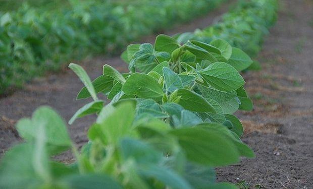 El precio de la soja cayó en la séptima semana.