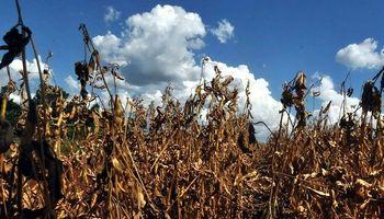 Córdoba: ampliarán las zonas declaradas en emergencia agropecuaria