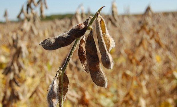 La campaña 2017/2018 de cosecha gruesa se vio afectada por una importante sequía.