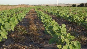 Aumentó un 3 por ciento el uso de cultivos transgénicos en el mundo
