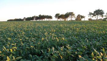 Sin nuevas lluvias podría caer el área sojera