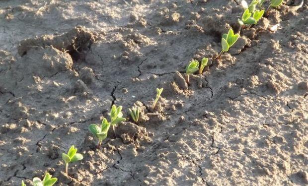 El Ministerio de Agroindustria estimó que el área sembrada con soja para la campaña 2017/2018 será de 16,75 millones de hectáreas.