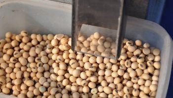 El ABC de los granos dañados: cómo se analiza una muestra