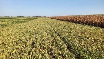 Zona núcleo: la soja de primera se arrebató y la de segunda llena granos con un pronóstico reservado