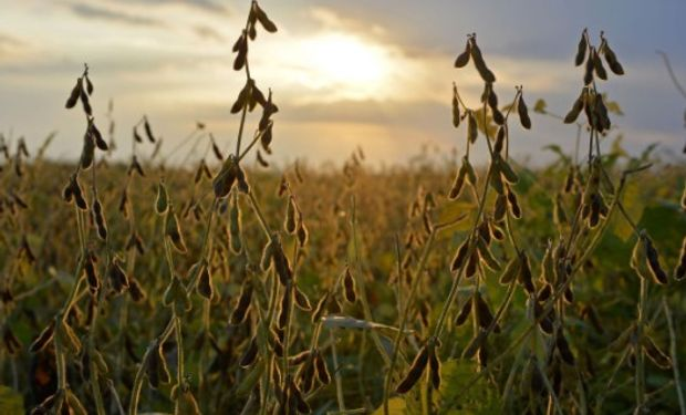 Las preocupaciones en Argentina ante la persistencia del clima seco continúan apuntalando a los precios de la soja.