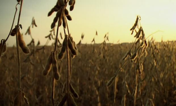 Firmeza de la soja en Chicago y bajas en el mercado local.