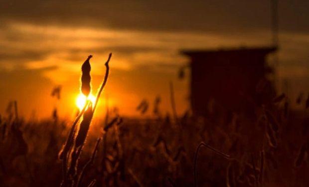 Las buenas condiciones climáticas observadas en el Midwest norteamericano siguen siendo ideales para los cultivos de soja y maíz.