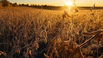 Alarma en las cadenas de los cuatro cultivos por el posible aumento de retenciones