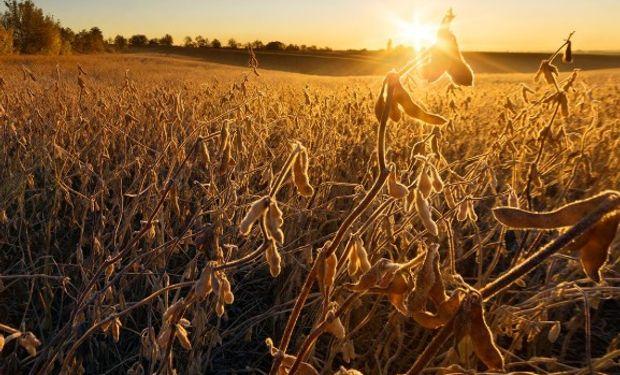 Las cuatro cadenas de los principales cultivos manifestaron su preocupación por un nuevo posible cambio en retenciones.
