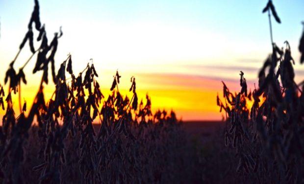 Expectativas de una abundante cosecha en Sudamérica.