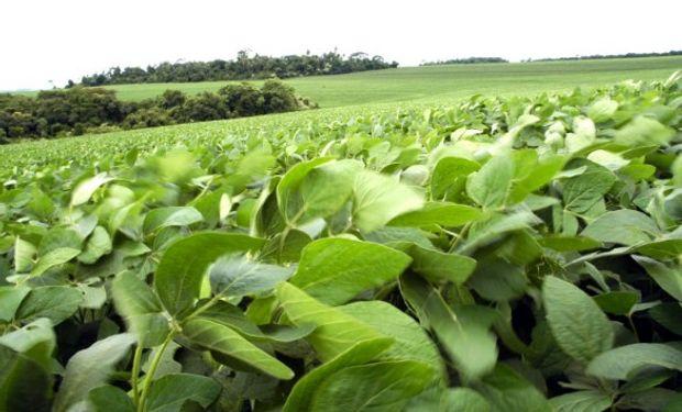 La demanda devuelve a los granos a terreno positivo.