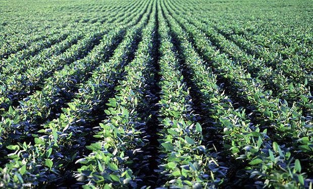 Productores invierten en detectar aquellas alternativas que le permitan producir más, cuidando el ambiente.