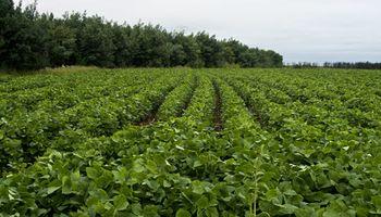 127 mil millones de dólares: el aporte de la biotecnología agrícola