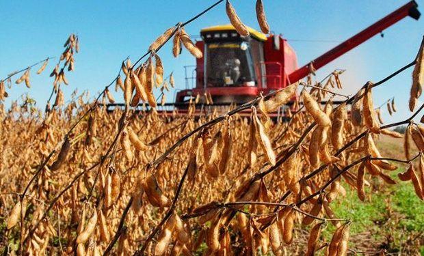 Comienzo de semana negativo para los granos.
