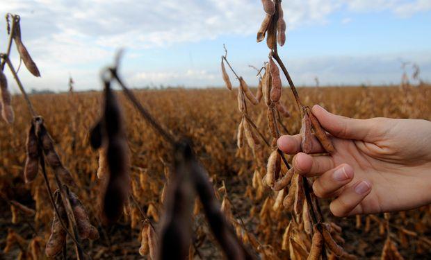 La entidad también reclamó la creación de una Ley de Seguros Multirriesgos para pequeños y medianos productores rurales.
