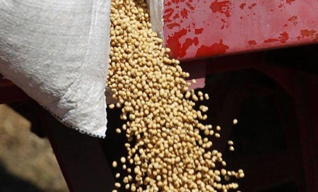 Tiempo clave. Los analistas adelantan que habría un fuerte recorte en los rindes del maíz y la producción bajaría 10 millones de toneladas.