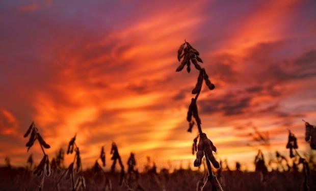 Compradores aprovechan para asegurarse maíz y soja con precios más bajos de lo esperado.