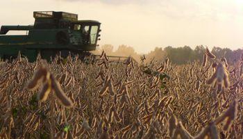 En el sudeste la soja no es el cultivo más rentable
