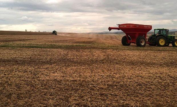 El mercado de granos se anticipa a posibles recortes productivos en Sudamérica