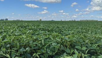 Mejoran las perspectivas de rinde en soja y el maíz cosechado continúa con resultados por debajo del promedio