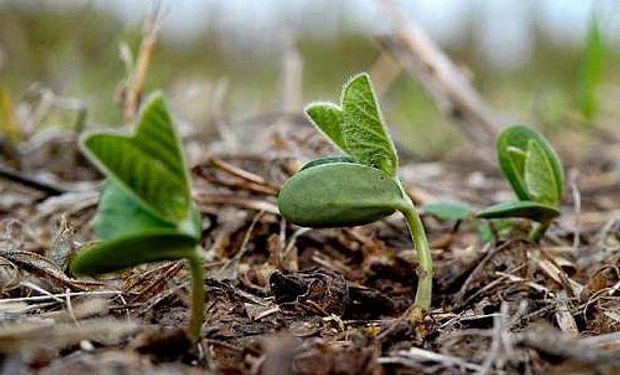 Es por el crecimiento del maíz y del girasol.