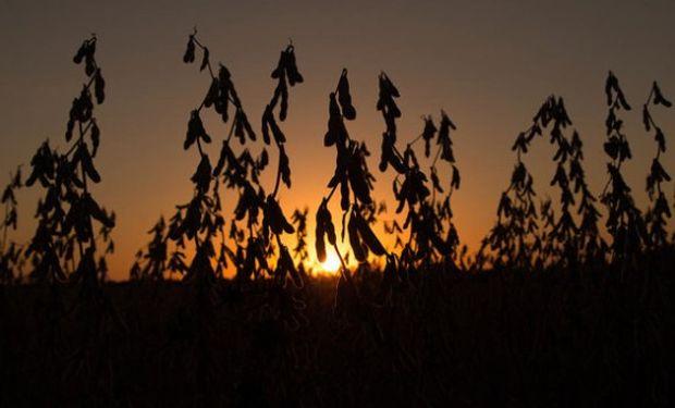 Gran caída de la soja tras mejorar la condición de cultivos.