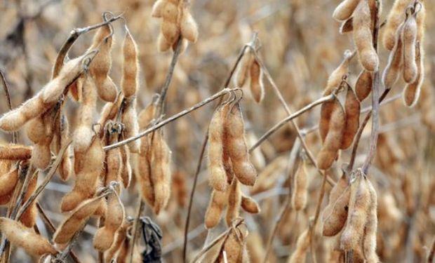 El repunte de los precios impulsó un fuerte aumento de las ventas de soja. Las fábricas pagaron entre 2370 y 2400 pesos por tonelada, $ 50 más que anteayer.
