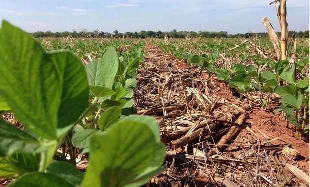 Siembra de soja llega al 65,5%