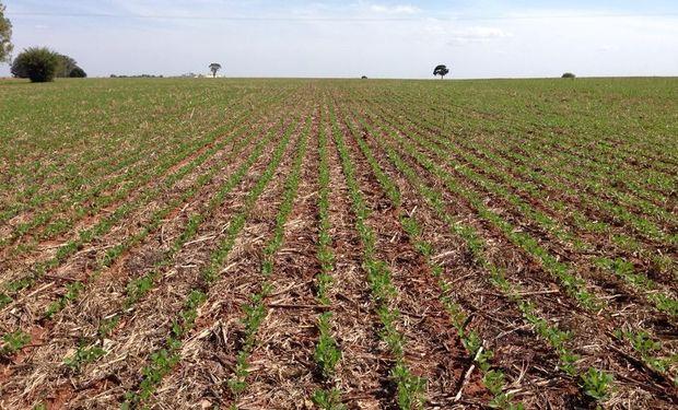 Las lluvias normalizaron la humedad del suelo en la zona agrícola central