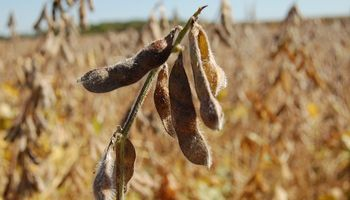 Clima seco favorece la cosecha de soja
