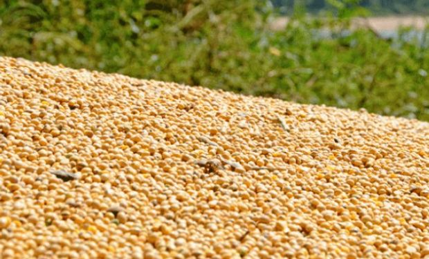 Brasil: presión negativa de la cosecha récord.
