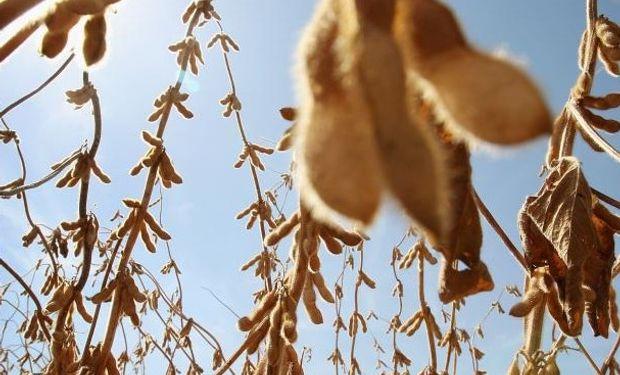 CBOT con la mira en la política de biocombustibles de los Estados Unidos.