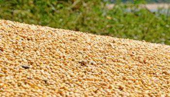 Presión negativa sobre los granos