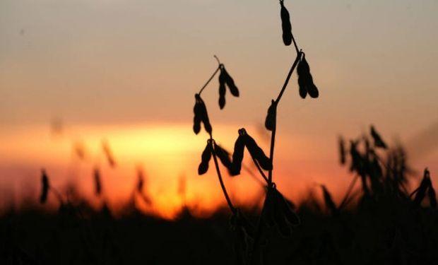 La soja logró establecerse en terreno positivo.