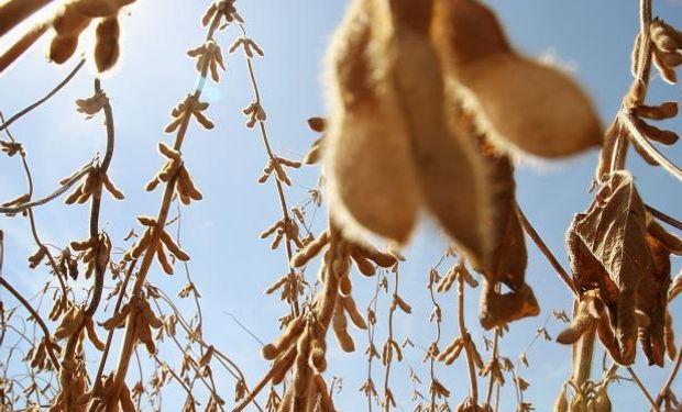 A pesar de la disminución de la soja, el mercado se mantuvo en camino a una ganancia semanal, con un clima seco en Argentina que apuntala los precios.