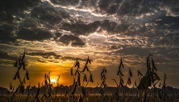 Los futuros de la soja volvieron a mostrar fuertes bajas en Chicago