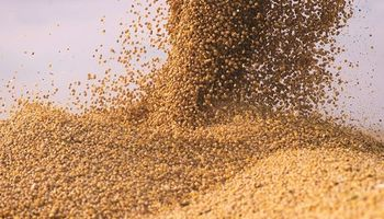 Leve retroceso en el precio de la soja tras las fuertes subas de ayer